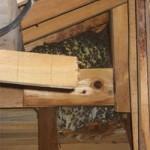 屋根裏へのミツバチの営巣(山川町)