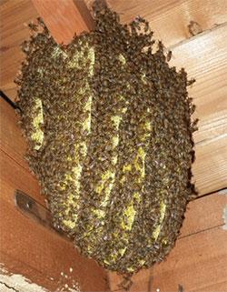 ミツバチの被害例